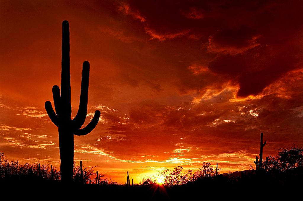 Saguoro sunset